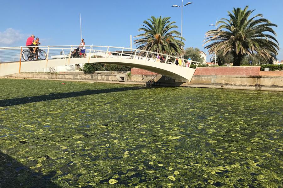 Alghe in mare alla Fossa dell'Abate, interviene la Guardia Costiera