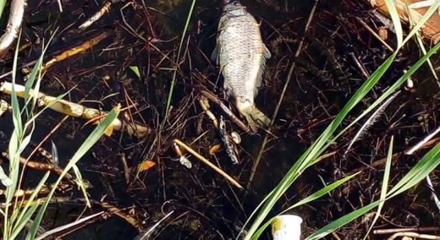 Siringhe, pesci morti e rifiuti: benvenuti nel Lago di Massaciuccoli