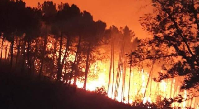 Rogo a Lugliano, fiamme estese su 50 ettari