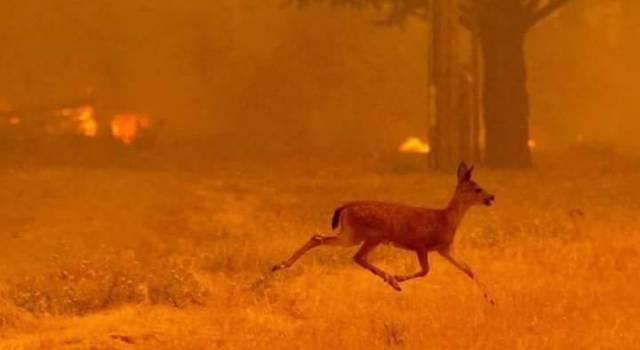 Inferno di fuoco sul Serra, animali arsi vivi e in fuga. L'Esercito presidia le case evacuate