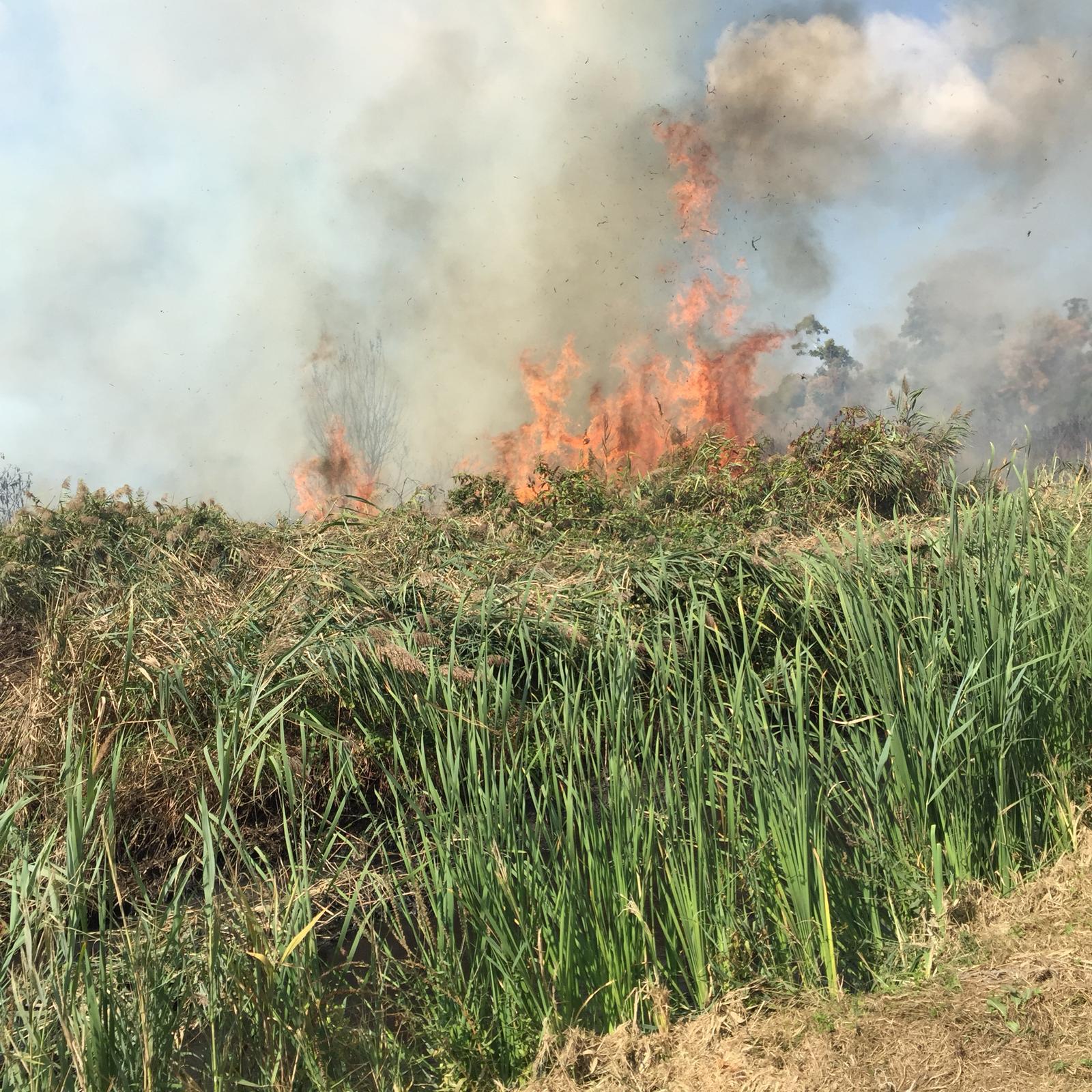Incendio della Torba a Massarosa: i risultati delle analisi di Arpat