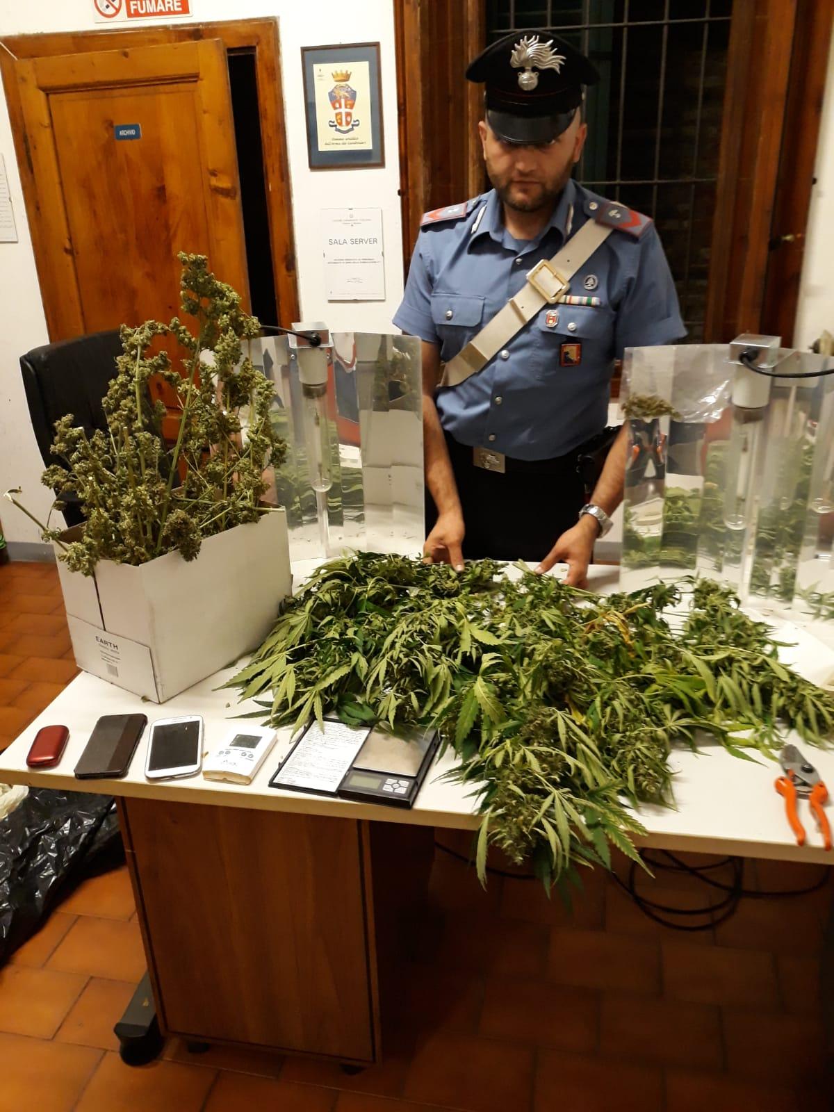Coltivazione illegale di canapa indiana due arresti for Eventi in toscana oggi