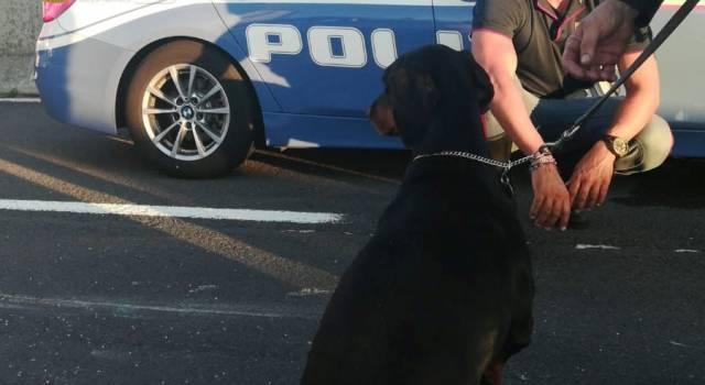 In auto con il suo cane viene tamponata, ma ha l'assicurazione e la patente scadute: la Polstrada prima soccorre tutti, poi le sequestra l'auto