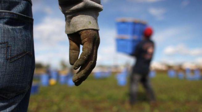 Caporalato, i lavoratori reclutati venivano impiegati in Toscana, Veneto e Svizzera