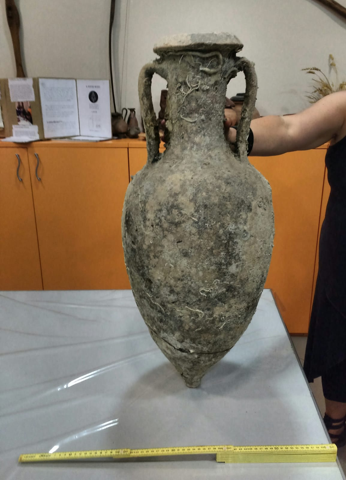 Un privato dona un'anfora romana al Museo