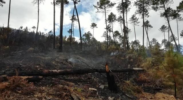 Incendio boschivo, incastrato dalle telecamere il responsabile