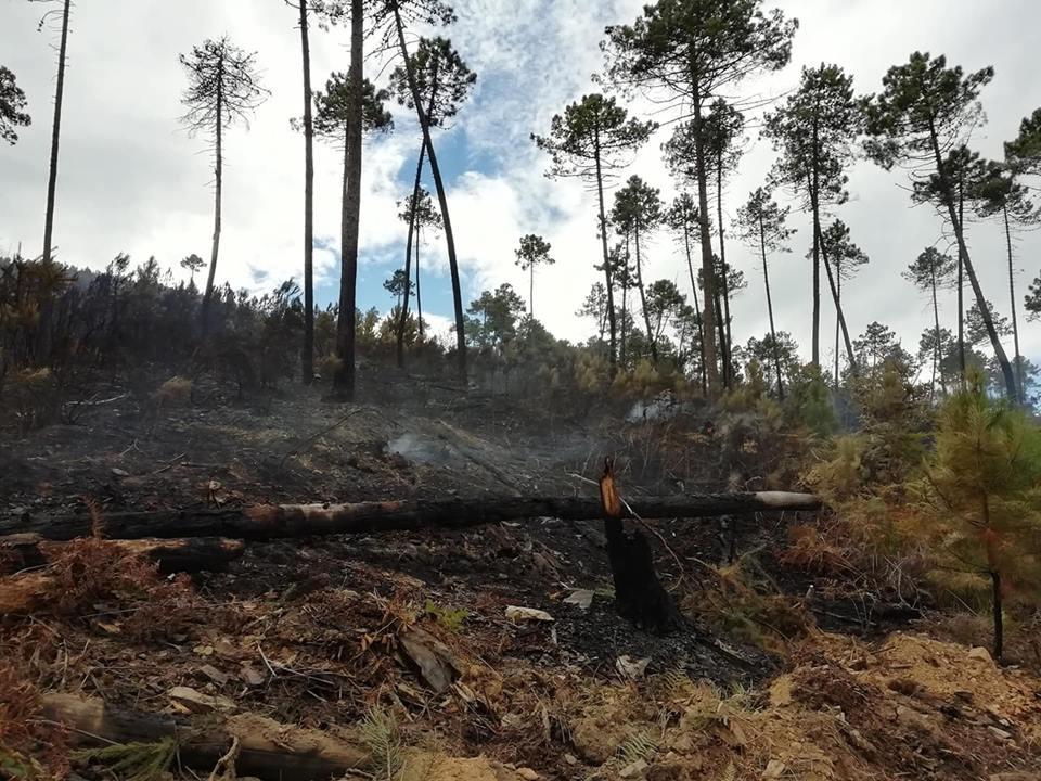 Incendio sul Monte Serra, lato lucchese, il day after: sono circa 24 gli ettari andati in fumo