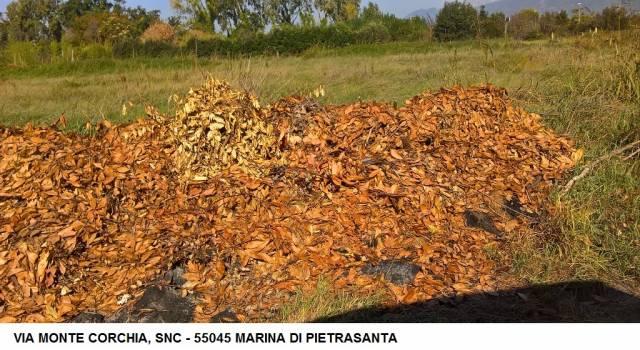 Degrado, i maleducati costano altri 600 euro di extra costi per rimozione rifiuti