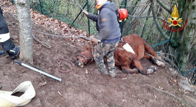 Cavallo precipita in un dirupo e si ferisce, salvato dai vigili del fuoco