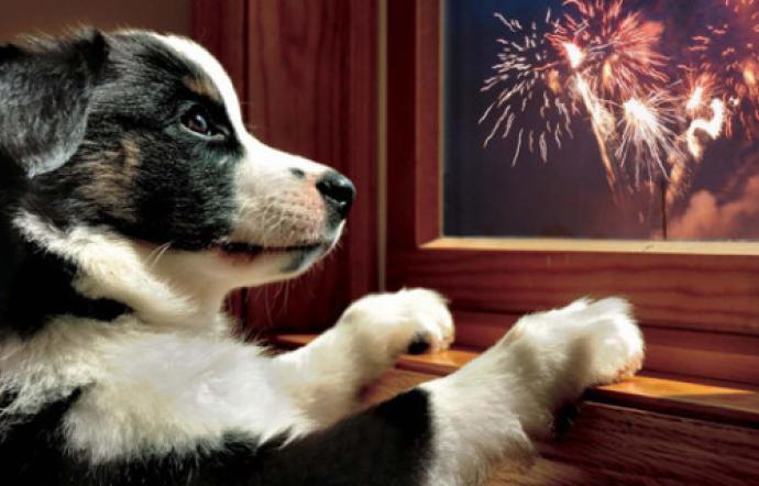 Botti di Capodanno, tornati a casa il 90% dei cani fuggiti