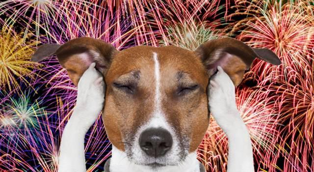 Capodanno, botti e… cani: il vademecum per evitare paure, ecco cosa fare