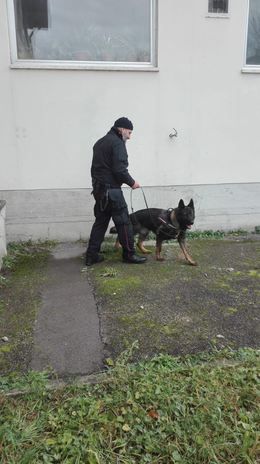 Scuole sicure, i Carabinieri col cane antidroga in Garfagnana e Mediavalle
