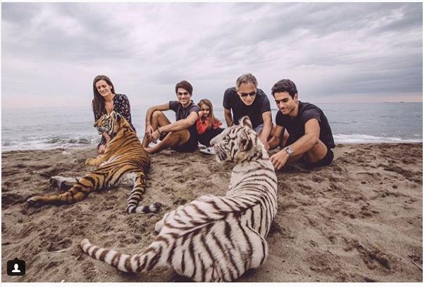 tigri in spiaggia