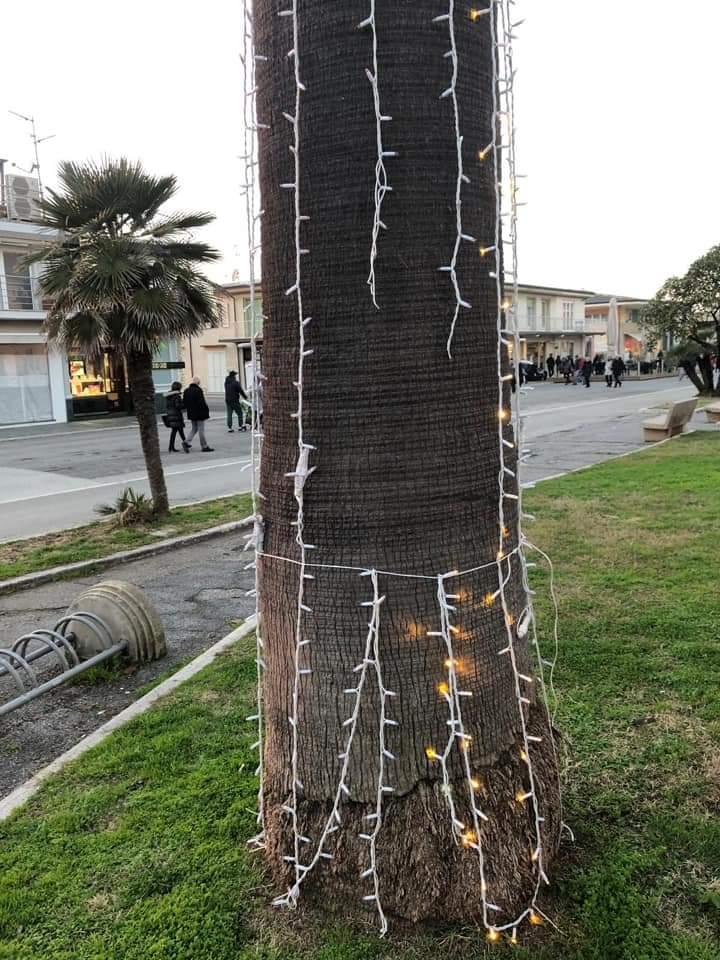 Vandali in Passeggiata, strappate le luci natalizie dalle palme