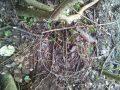 Caccia di frodo alla Lecciona, sequestrate tre trappole con lacci di acciaio