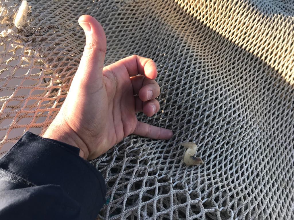 Peschereccio con rete irregolare, multa e sequestro dell'attrezzatura