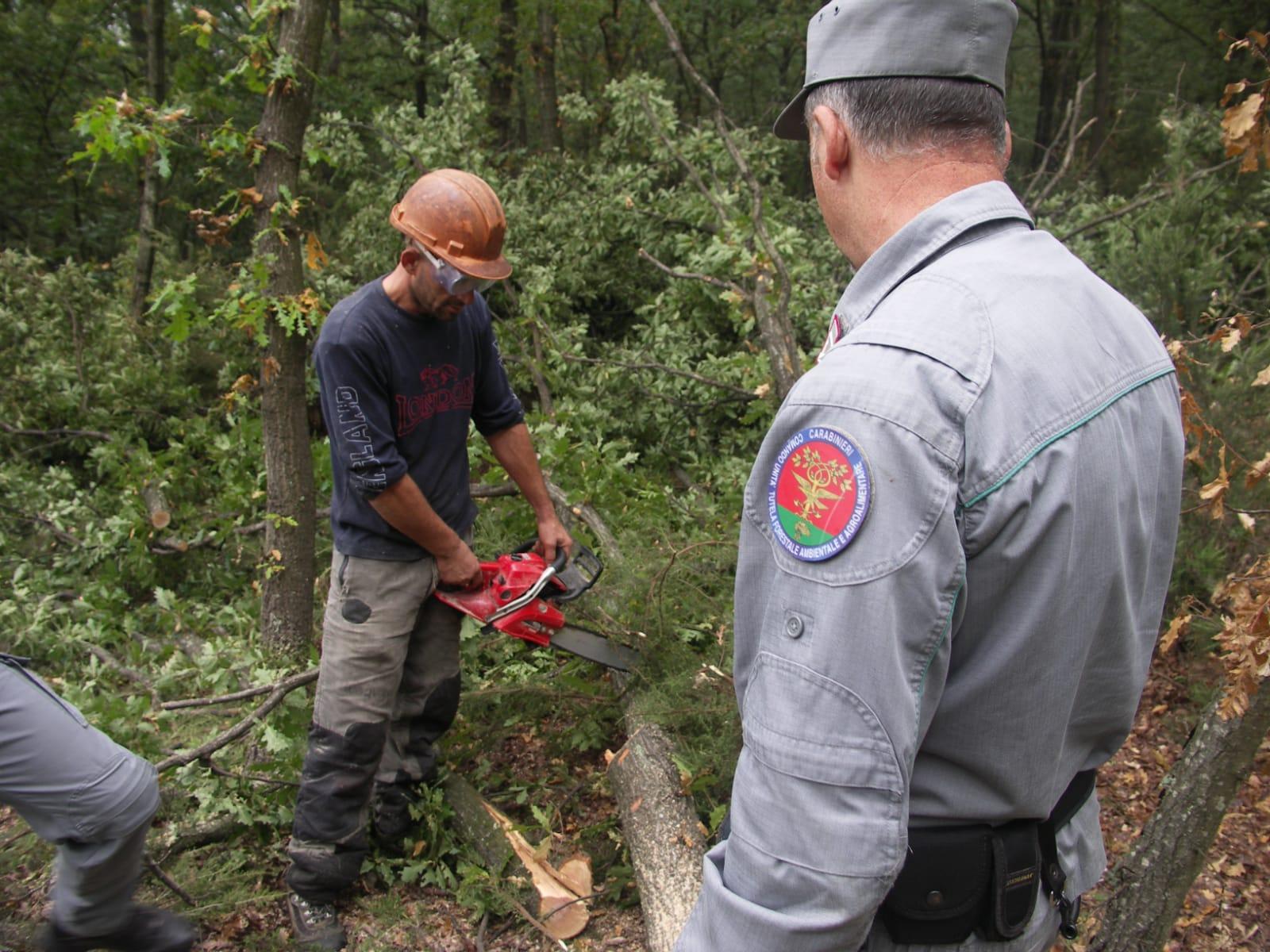Tagliatori di alberi non in regola con il permesso di soggiorno, denunciati operai e titolare della ditta. Sanzioni per oltre 3000 euro