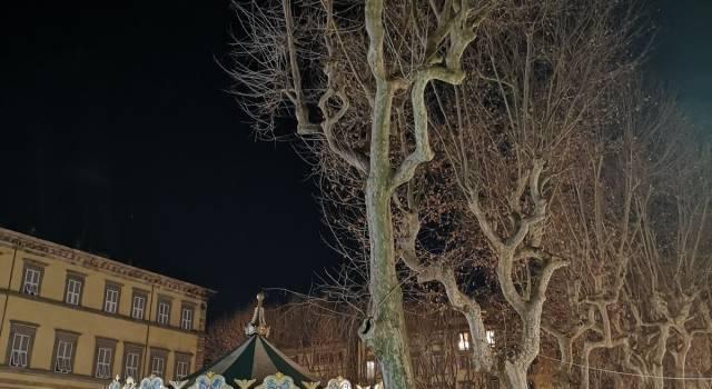 Cancro colorato del platano: la Regione ordina l'abbattimento di quattro alberi