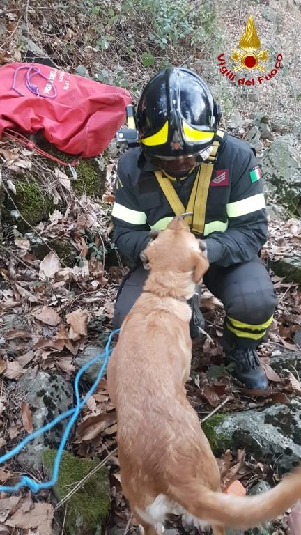 Spaventata dai botti di Capodanno fugge nel bosco e finisce in dirupo, la 4 zampe Una salvata dai pompieri