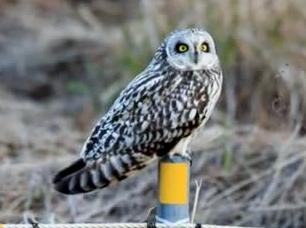Studi WWF, in Versiliana 92 specie di uccelli