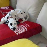 Amore tra bambini e cani: domani la giornata  nazionale