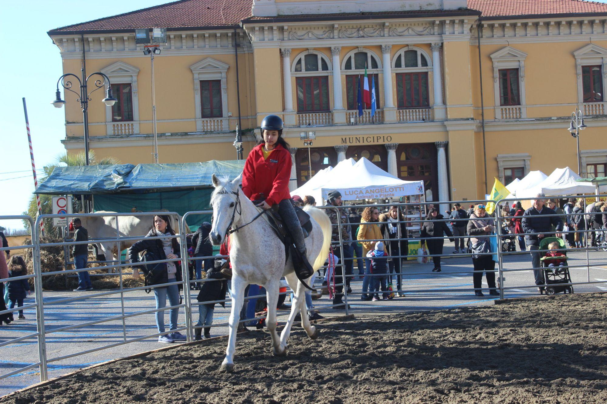 Centro sold out per San Biagio, animali fattoria Piazza Matteotti i grandi protagonisti