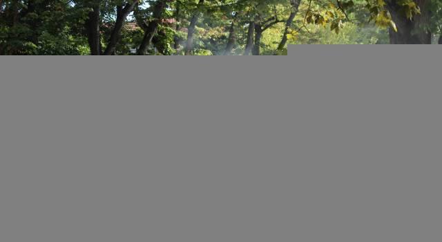 Viabilità: Capriglia, al via ulteriori ripristini