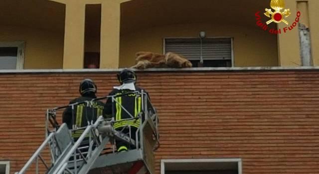 Immobilizzato sul parapetto di un balcone al 4° piano, cane salvato dai pompieri