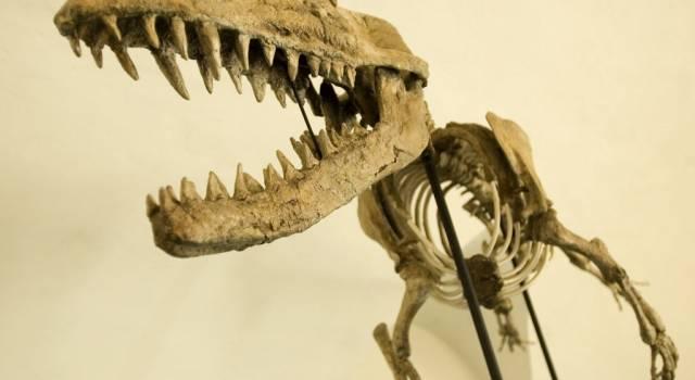Il Museo di Storia Naturale dell'Università di Pisa primo nella classifica dei musei di rilevanza regionale