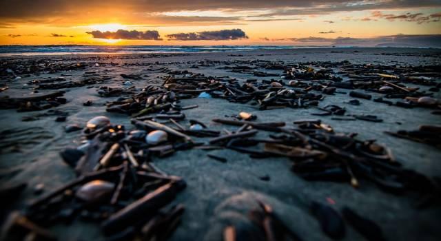 Plastiche e rifiuti in mare: i dati del monitoraggio Arpat