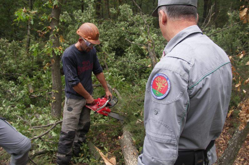 Ditta boschiva occupava lavoratori irregolari senza for Regolarizzare badante senza permesso di soggiorno
