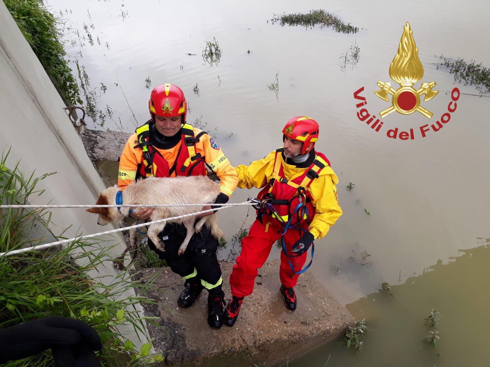 Cade nel fiume e non riesce a risalire, cane salvato dai pompieri