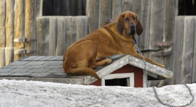 A Natale abbandonati  358 cani: tra questi circa 100 sono cuccioli