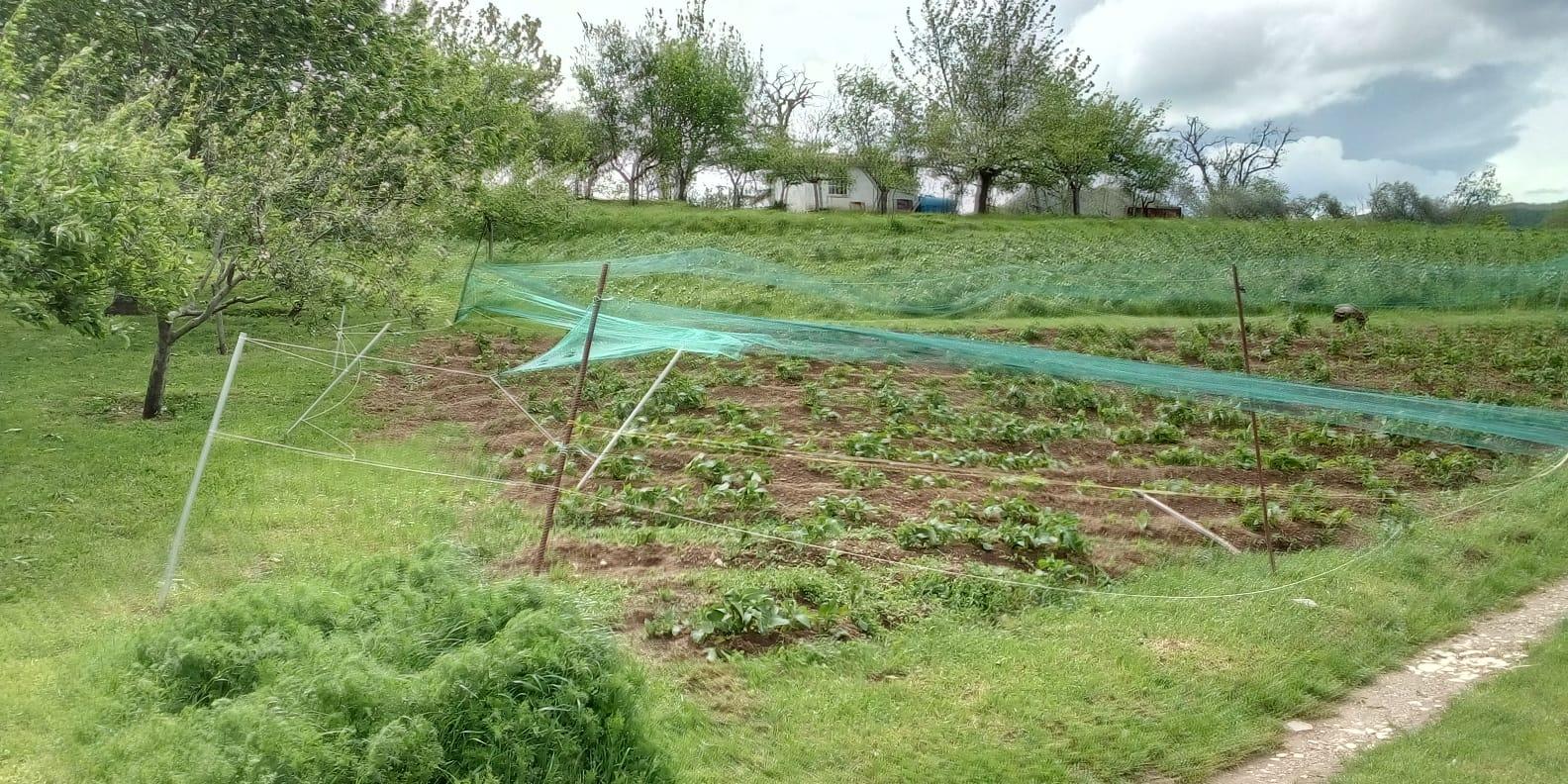 Agricoltura: il maltempo danneggia le produzioni e frena le vendite