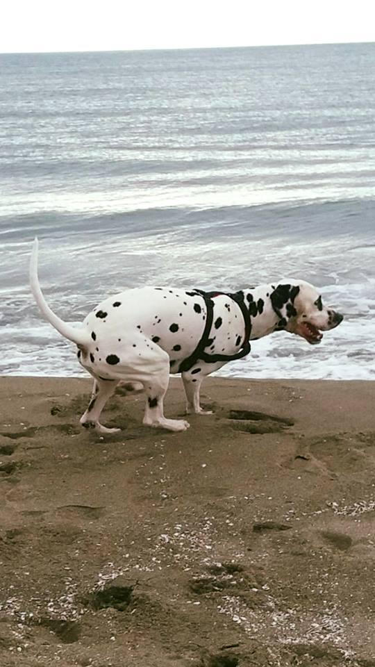 Diritti e doveri dei cani ( e dei padroni ) in spiaggia