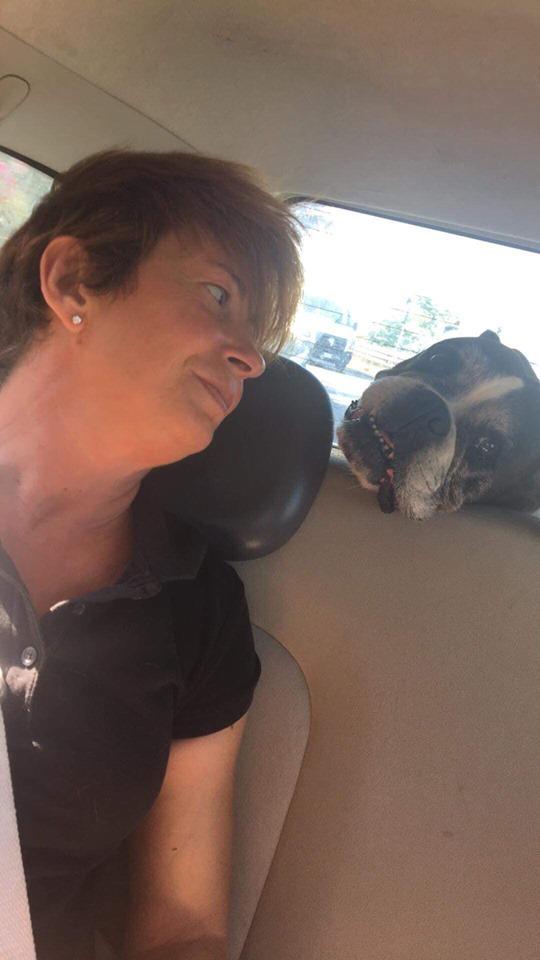 Dopo il suicidio allo sgambatoio Lola è finita al canile di Viareggio, appello sui social per trovare un'adozione