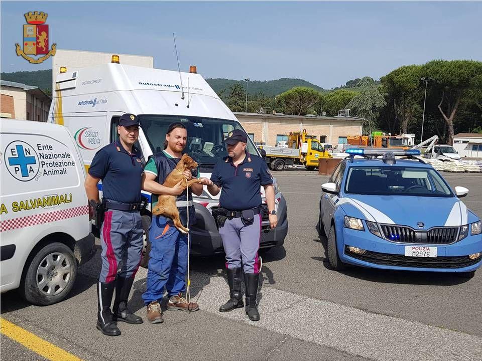Canina abbandonata in A/1: la Polstrada interviene per salvarla