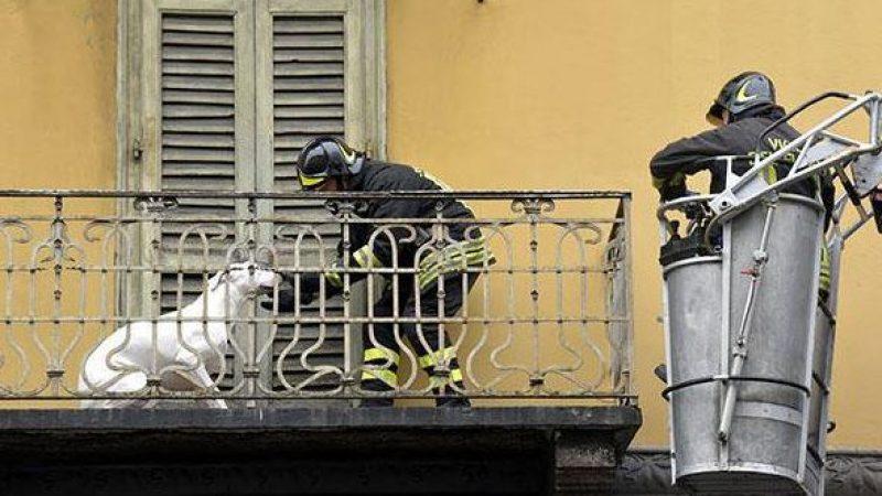 Cani sui balconi, appello ai sindaci per ordinanze di divieto: lo scorso anno morti per il caldo 1200 quattro zampe