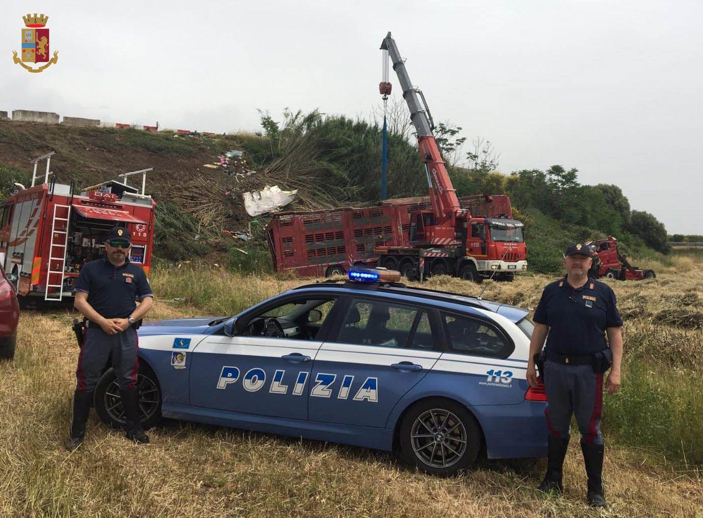 Camion carico di vitelli si rovescia vicino Gavorrano: quelli sopravvissuti sono scappati nei campi