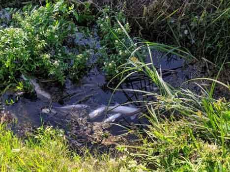 Moria di pesci a Capezzano Pianore, Arpat analizza l'acqua dei fossi