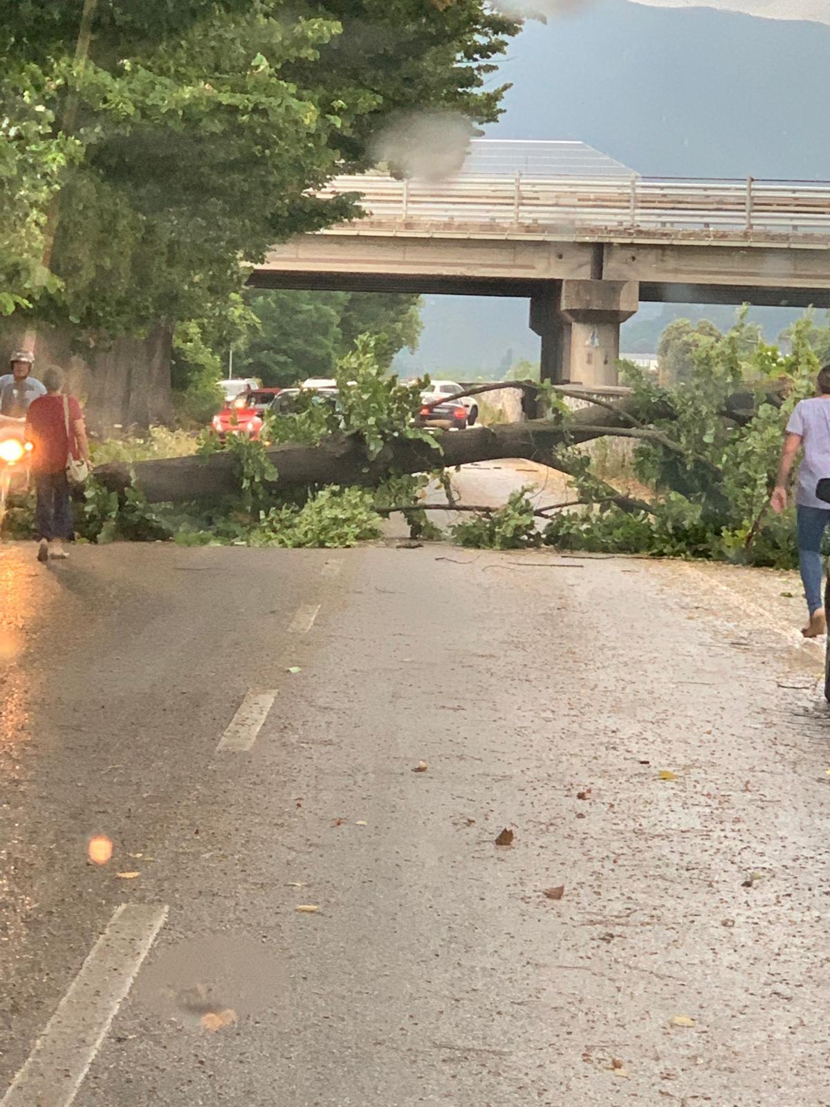 Fulmini, tuoni e acqua in Versilia: a Camaiore cade un albero sulla provinciale