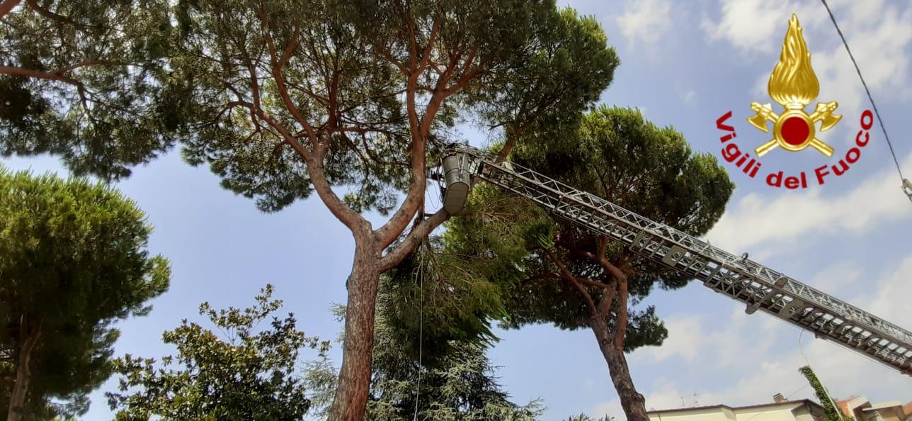 Piante pericolanti a Torre del Lago, intervengono i vigili del fuoco