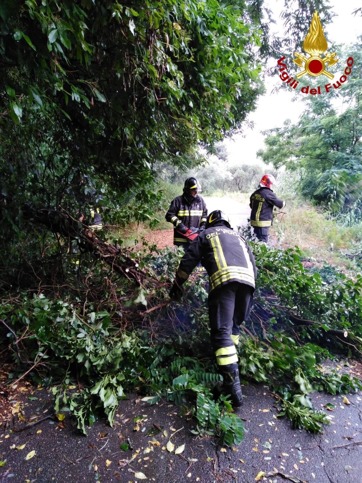Vento, alberi caduti e temporali. Temperatura scesa