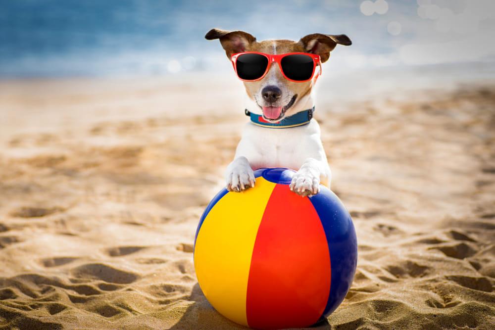 Cani in spiaggia: fioccano le prime multe in Toscana, Romagna e Calabria