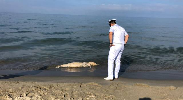 Delfini morti: le analisi mostrano anche presenza DDT e PCB