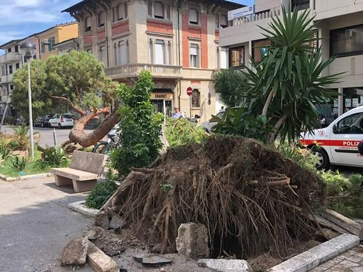 Pino crolla in via Mazzini: sfiorata la tragedia