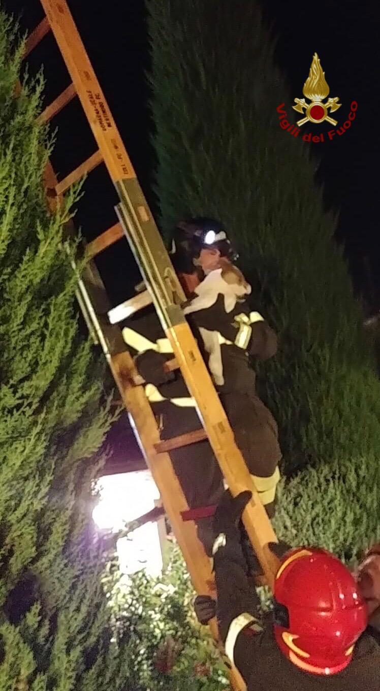 Sale su un cipresso e non riesce a scendere, cane salvato dai pompieri