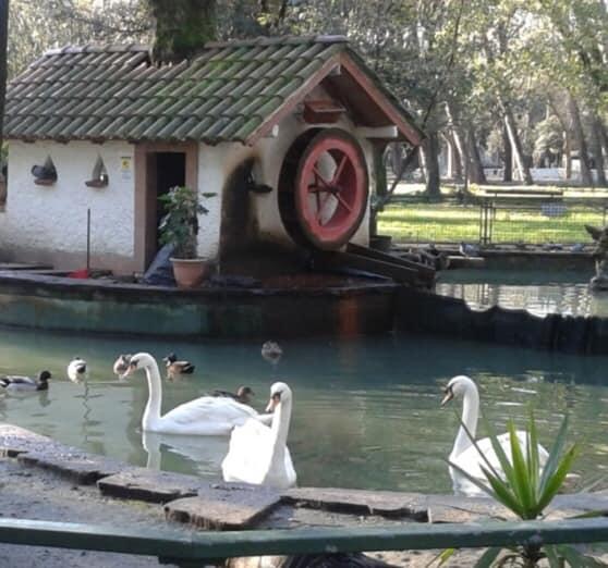 """Indagini sulle Kronos, il Sindaco di Viareggio: """"Che la storia del laghetto e dei pavoni sia di esempio"""""""