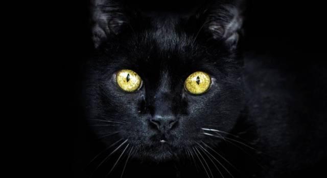 """Halloween: """"Proteggi il tuo gatto nero nella notte delle streghe"""""""