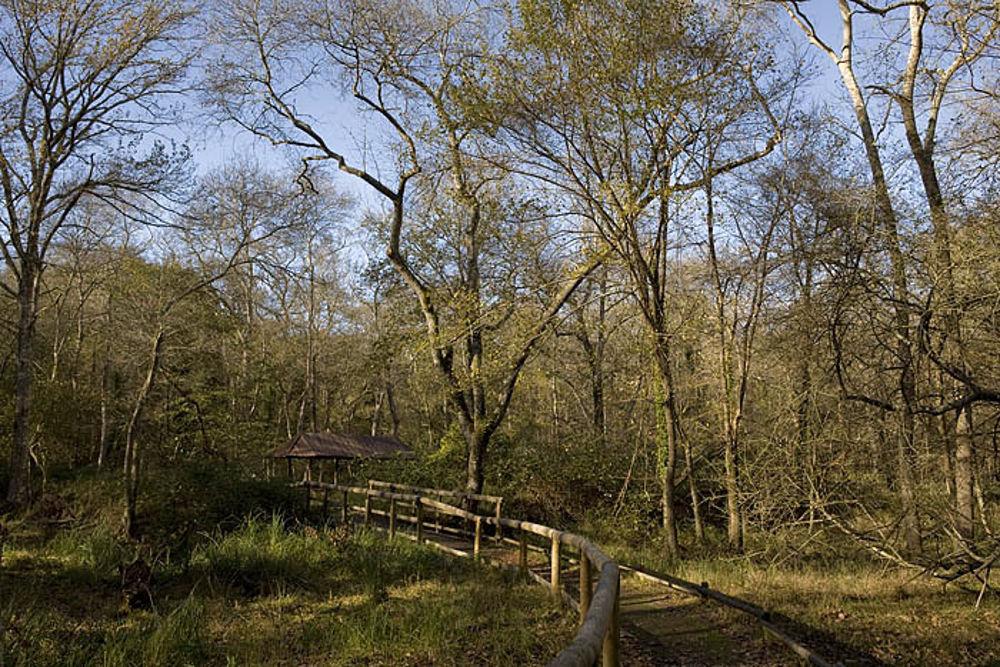 Attenzione al selvaggiume: il Parco di San Rossore mette in guardia dall'acaro autunnale